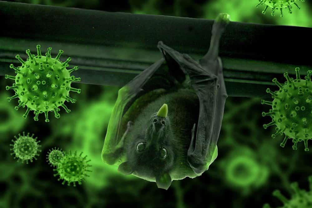 Study shows bat 'super immunity' may explain how they carry coronaviruses