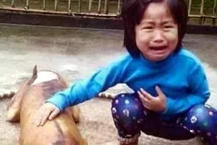 Vietnamese girl finds missing dog roasted and sold