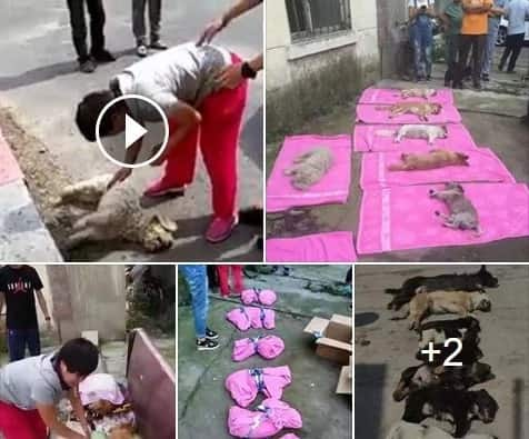 School guards poison dogs adopted by woman in China