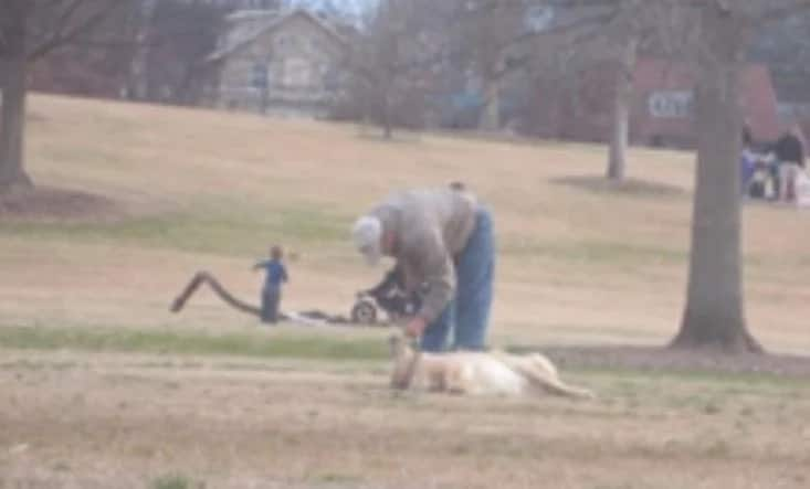 Laziest Dog In The World Refuses To Leave The Park And It's Fun As WOOF!
