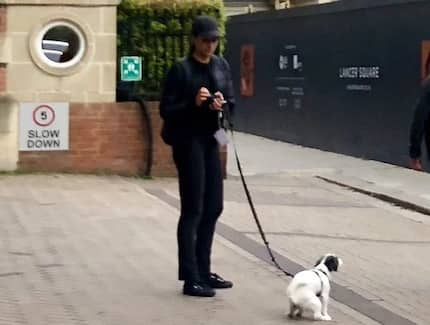 Reporter uploads photo of 'Duchess Meghan' walking her dog, announces to the world 'princesses pick up poop too'