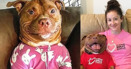 Meaty McMeatster won't stop smiling since the day he was taken from shelter