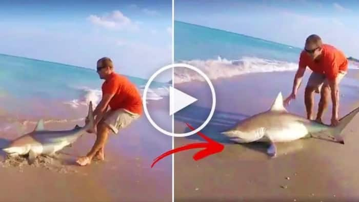 Watch this brave man drag a deadly shark onto the beach. You won't expect what happens next!