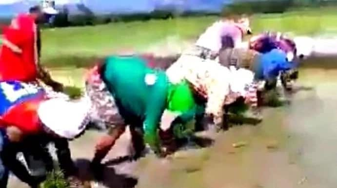 Filipino farmers take rice planting on the next level