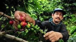 Global Warming Could Cause Coffee To Go Extinct In The Near Future!