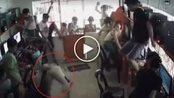 Crazy fight between 2 wild dogs scares Pinoy customers in computer shop
