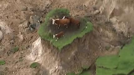 Hindi pa namin panahon mga bes! Farmer rescues 3 stranded cows that survived NZ 7.8 magnitude quake