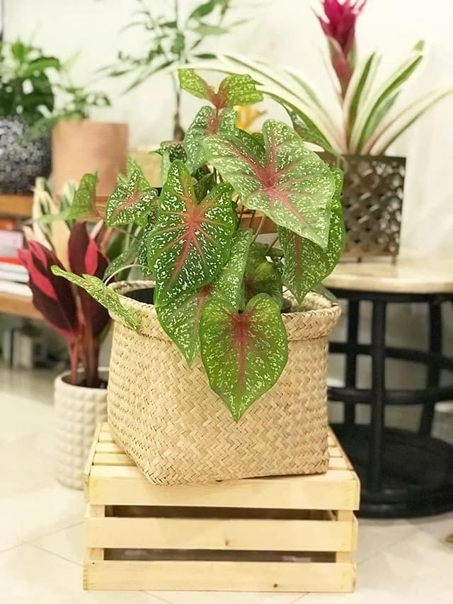 Certified plantita! A glimpse of Gretchen Fullido's plant babies at home