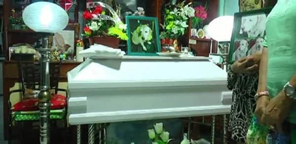 Pet owner gives dog human burial