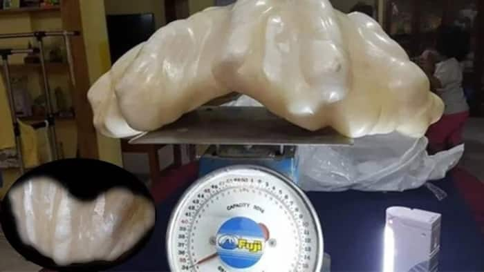 This could be the world's LARGEST giant pearl, and it was just HIDDEN under the bed for 10 years!