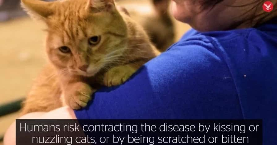 Here's Why You Should NEVER Hug Your Cat