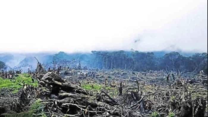 LOOK! Farmers burn parts of Mt. Pulag; here's why