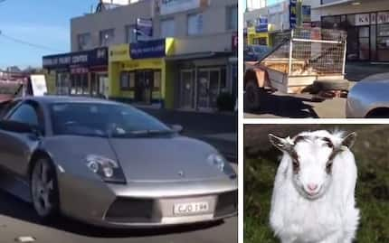 This Lambrorgini tows cell full of Goats and you will never guess where are they going