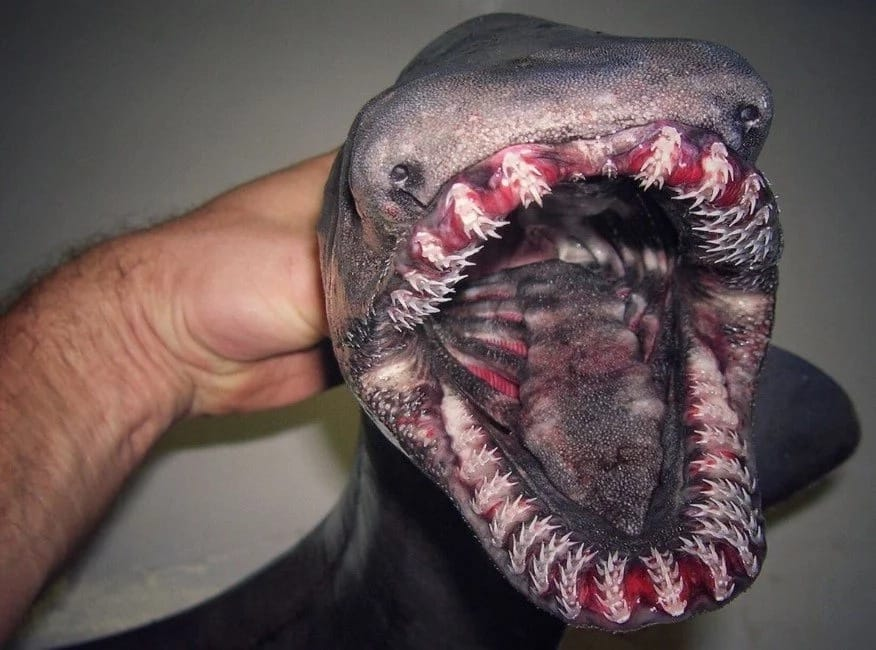 Russian Deep Sea Fisherman Shares The Monsters He Catches On Twitter