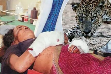 Old woman has been fighting with leopard for hour with only sickle, it's end will surprise you