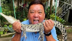 Harry Roque tests positive for COVID-19 infection: 'It came as a shock'