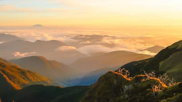 An overview of the beautiful Mt. Pulag: What to bring and expect while hiking