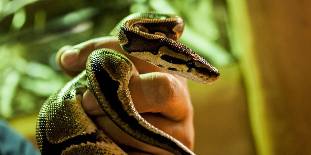 4 cobras confiscated at Arranque Market in Manila