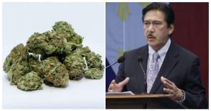 Sotto says medical mj is already allowed in Philippines