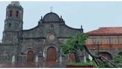 'Kalayaan Tree' sa tabi ng Barasoain Church, naputol dahil sa Bagyong Ulysses