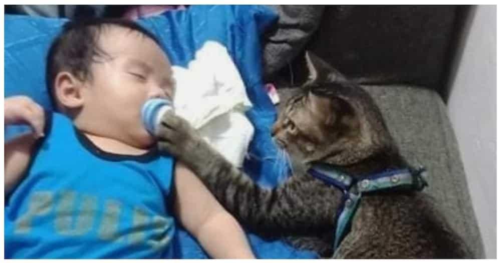 Pusang nag-ala baby-sitter, kinagiliwan ng netizens
