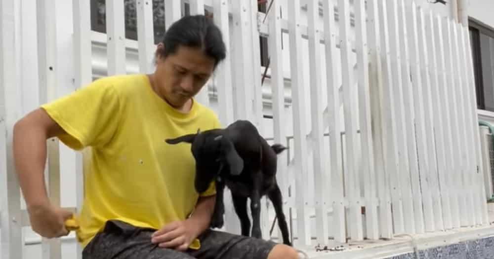 Robin Padilla, tumigil sa pagkain ng kambing matapos mapamahal sa pet goat