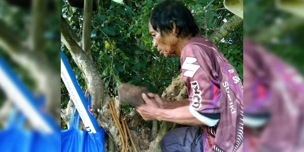 Lolo builds small treehouse for granddaughter so she could have signal for her online class