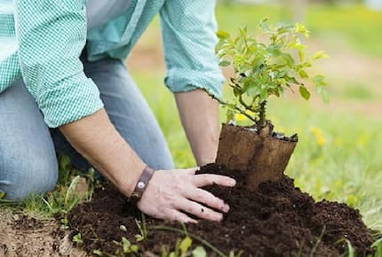 House proposes to require tree planting for new parents and graduates