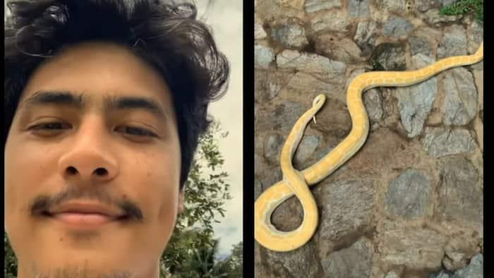 Kiko Estrada, nag-trending matapos mag-post ng video ng ahas sa social media