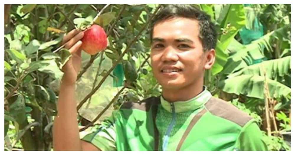 Agriculture student, matagumpay na nakapagpatubo ng 'apple' sa Davao del Sur