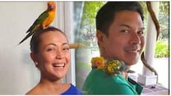 Raymart Santiago at Jodi Sta. Maria, nag-alok ng pabuya sa makakahanap sa kanilang alagang ibon