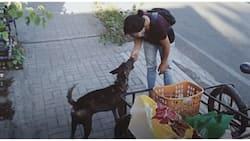 Frontliners ng mga aso! Dog lover, matiyagang nag-iikot para pakainin ang mga asong walang tirahan