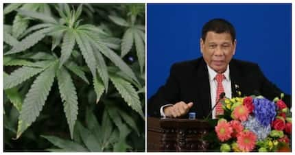 Fact check: Can cannabis make someone stay awake for longer period as said by Pres. Duterte?